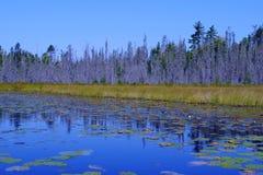 从界限水的场面 免版税库存照片