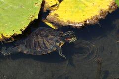留下乌龟水 免版税库存照片