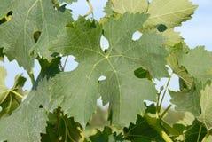 留下墨尔乐红葡萄酒 免版税图库摄影