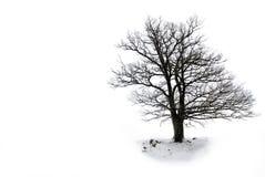 留下孤立结构树 库存图片