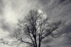 留下孤立结构树 库存照片