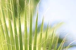 留下掌上型计算机热带 新鲜的绿色棕榈树叶子特写镜头视图  免版税图库摄影