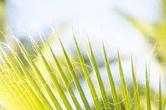 留下掌上型计算机热带 新鲜的绿色棕榈树叶子特写镜头视图  免版税库存图片