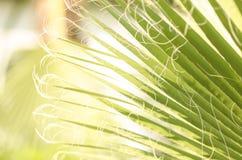 留下掌上型计算机热带 新鲜的绿色棕榈树叶子特写镜头视图  免版税库存照片