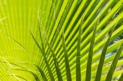 留下掌上型计算机热带 新鲜的绿色棕榈树叶子特写镜头视图  图库摄影
