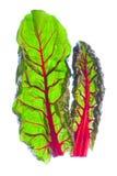 留下有机红色菠菜二 免版税图库摄影