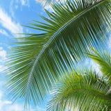 留下棕榈树 免版税图库摄影