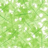 留下槭树无缝的结构 免版税库存图片