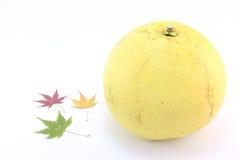 留下槭树柚 免版税库存图片