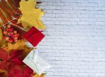 留下槭树石墙,礼物盒,莓果,折扣,框架 免版税图库摄影