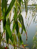 留下特写镜头在湖一边 免版税图库摄影