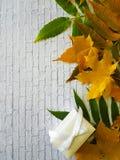 留下秋天白色砖墙,礼物盒 免版税图库摄影