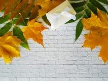 留下秋天白色砖墙,礼物盒 库存图片