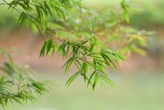 留下竹子 免版税库存照片