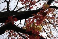 留下红色结构树黄色 免版税图库摄影