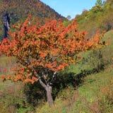 留下红色结构树 库存照片