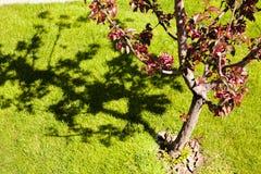 留下红色结构树 图库摄影