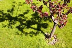留下红色结构树 免版税图库摄影