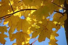 留下结构树 免版税库存照片