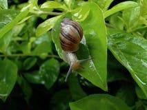 留下蜗牛 库存照片
