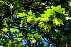 留下结构树 免版税图库摄影