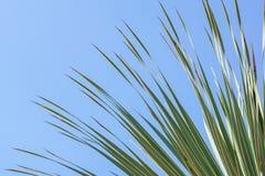 留给椰子分支框架多云蓝天背景 免版税库存图片