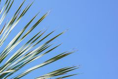 留给椰子分支框架多云蓝天背景 图库摄影