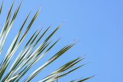 留给椰子分支框架多云蓝天背景 免版税图库摄影