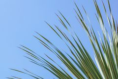 留给椰子分支框架多云蓝天背景 库存图片