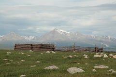 畜栏和山峰用力嚼Sardyk - 3491海拔米 库存照片