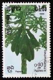 番木瓜或者番瓜树,一系列的图象`异乎寻常的果子`大约1986年 免版税库存图片