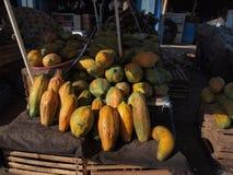 番木瓜热带水果 库存图片