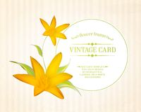 番红花您的卡片设计的春天花。 库存图片