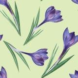 番红花 无缝花卉的模式 免版税库存照片