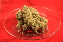 医疗大麻芽三重奏  免版税库存图片