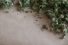 医疗大麻 库存图片