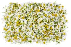 医疗春黄菊被隔绝的横幅 库存照片