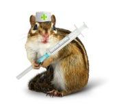 治疗概念、滑稽的灰鼠与注射器和医生帽子 库存图片