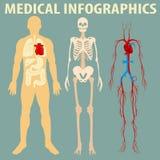 医疗infographic人体 皇族释放例证
