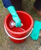 疟蚊网的混合的毒物 免版税库存图片