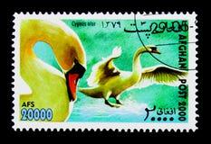 疣鼻天鹅(天鹅座olor),国际邮票陈列WIPA \ '00 图库摄影