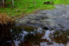 结疤的冰川岩石 库存照片