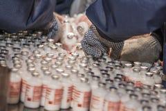 疫苗海豹捕猎中心 库存图片