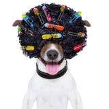 疯狂的卷发狗 免版税库存照片