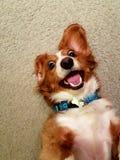 疯狂的狗 库存图片