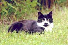疯狂的猫 免版税图库摄影