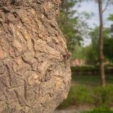 疯狂的自然爱恋的龙飞行树 库存图片