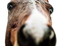 疯狂的马 免版税图库摄影