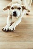 疲乏的狗 免版税库存照片