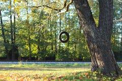 疲倦垂悬从除铁路以外的树的摇摆 免版税库存照片